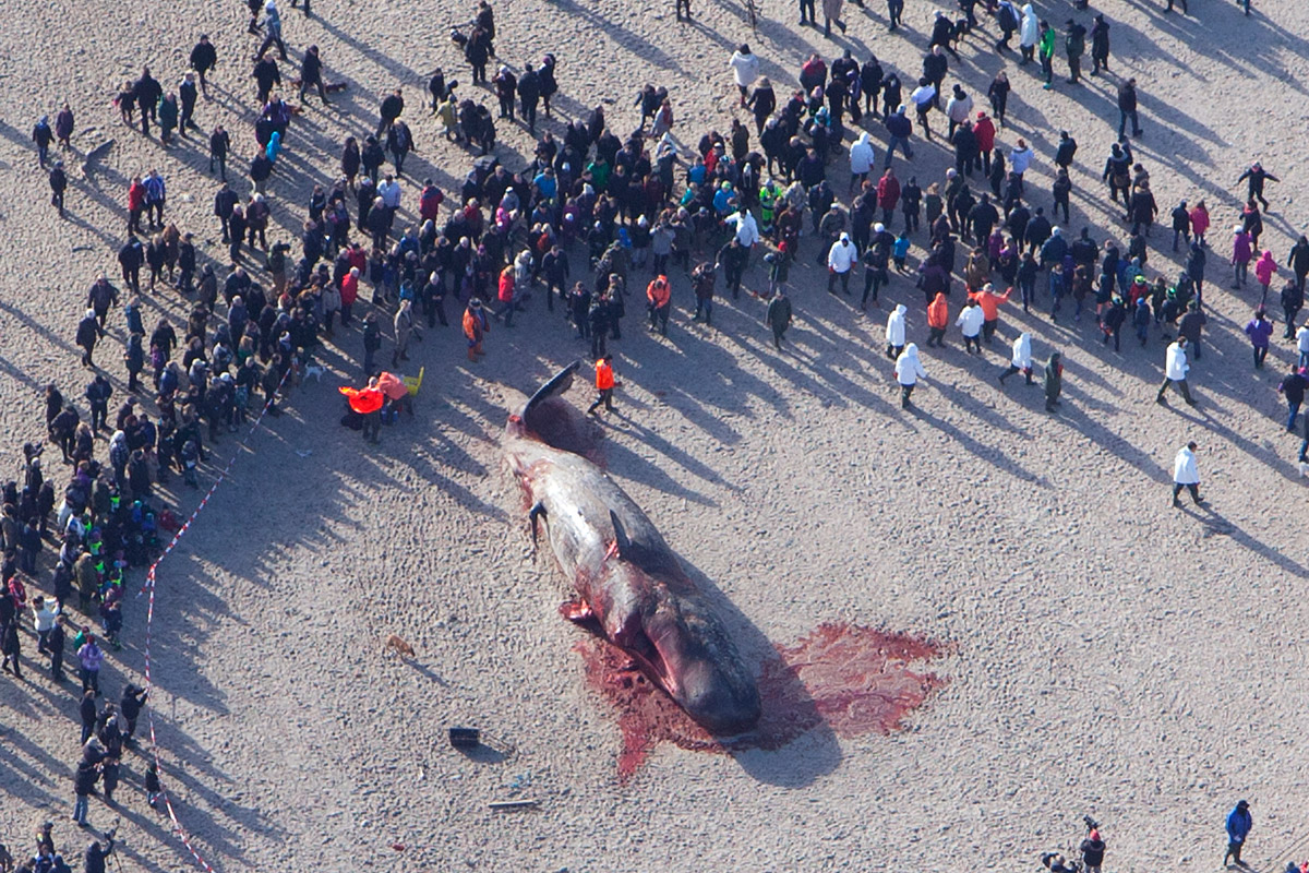 Luftfoto-strandet-hval-ved-Vestkysten-februar-2014